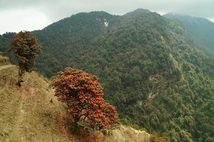 nepal single