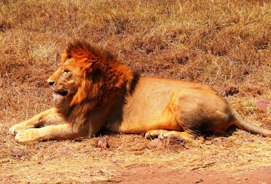 4 Tage Safari   Tarangire, Lake Manyara und Ngorongoro National Parks
