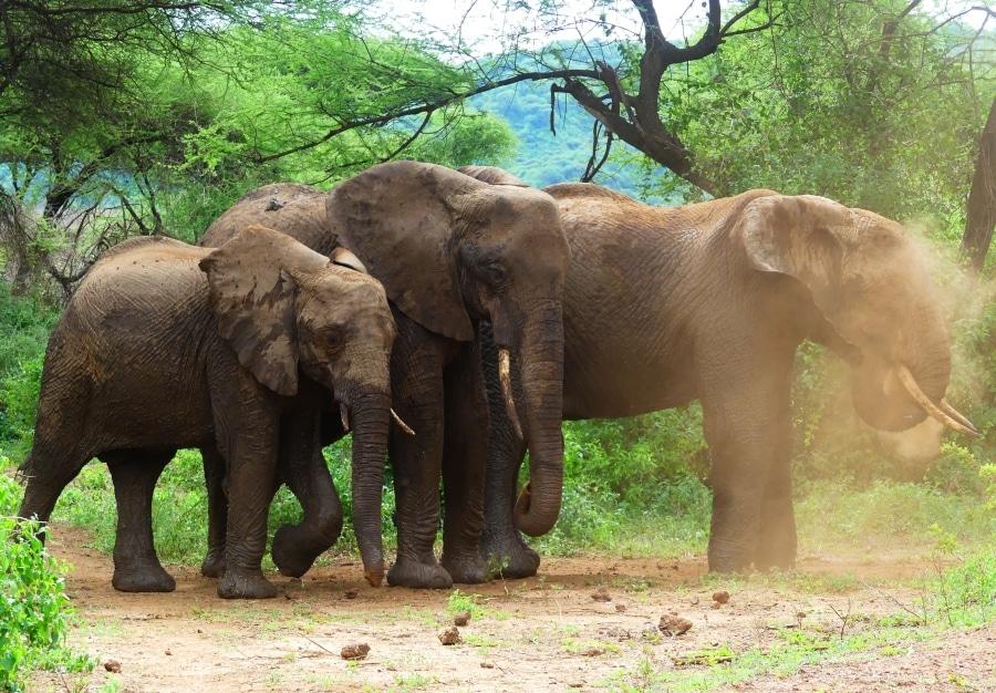 2 Tage Safari   Kurz und Intensiv