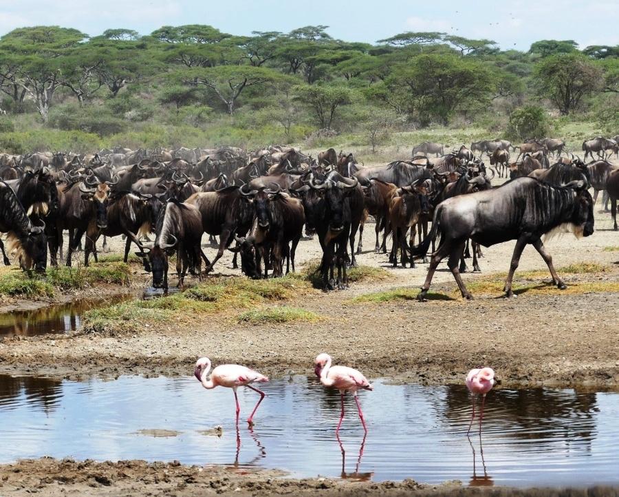 8 Tage Safari   Serengeti, Tarangire, Lake Manyara & Ngorongoro Krater