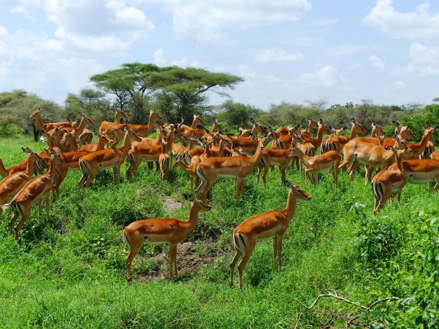 Safari & Badeurlaub   Tarangire – Serengeti, Ngorongoro, Lake Manyara & Sansibar